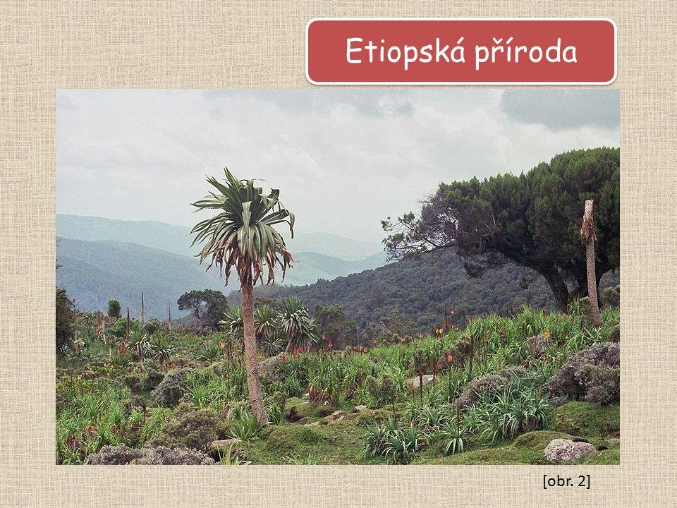Etiopská příroda [obr. 2]